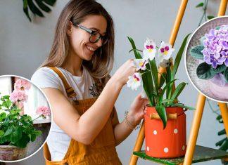 11 комнатных растений, чтобы заполнить ваш дом приятной атмосферой